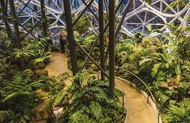 Denken im Wald – jetzt auch bei Amazon