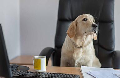 Kraulen gegen den Stress: Warum in jedes Büro ein Hund gehört