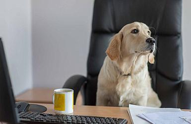 Büro Hund Bürohund Tiere im Büro Büroklima Ideenkultur moderne Arbeitswelt New Work Kreativität Agile
